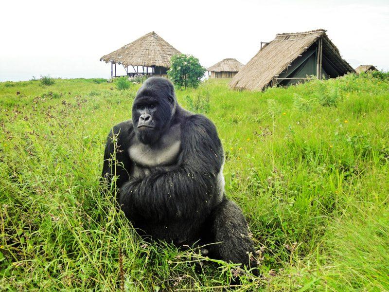 Repubblica Democratica del Congo (Ex Zaire)