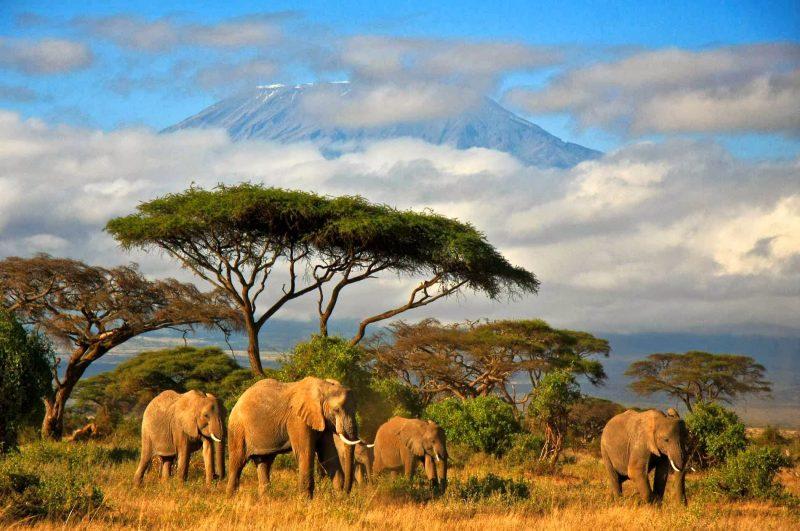 Tanzania (Repubblica unita di Tanzania)